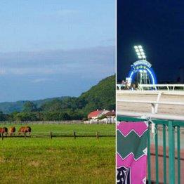 全長90キロ 草をはむ馬を見ながら走る「優駿浪漫街道」