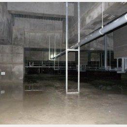 豊洲新市場の建物地下(日本共産党都議団撮影)