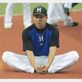 今オフは千葉県でトレーニング(C)日刊ゲンダイ