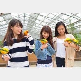 静岡県の「掛川花鳥園」/(提供写真)