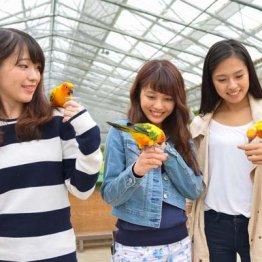 【旅行】「鳥」と「宇宙」に触れるオススメのスポット