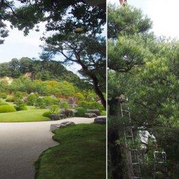 島根県「13年連続日本一」の庭園を守り続ける庭師たち