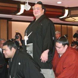 19年ぶりに日本人横綱が誕生