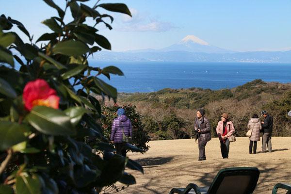 椿と富士山の競演(椿花ガーデン)/(C)日刊ゲンダイ