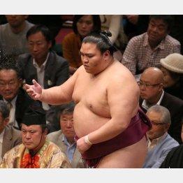 個性派の代表(御嶽海)/(C)日刊ゲンダイ