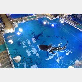 世界最大級水族館「海遊館」(バックヤードから)