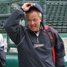 練習3時間で大阪2強に 履正社・岡田監督に指導法を聞く