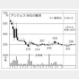 アンジェスMG(C)日刊ゲンダイ