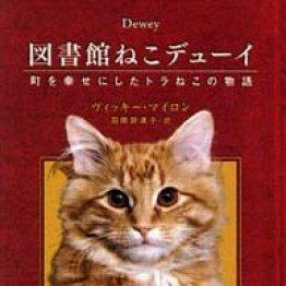 訪れる人を癒しつづけた図書館に住む猫