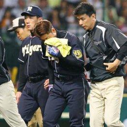 死球を受けベンチに戻る阪神・鳥谷(左は金本監督)