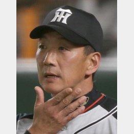 金本監督は首位陥落に多くを語らなかった(C)日刊ゲンダイ