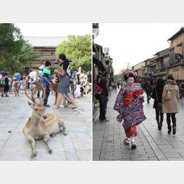 奈良京都は断層運動で盆地に(C)日刊ゲンダイ