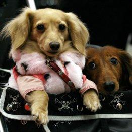 ペットの診察だけじゃない 獣医学部は何を教えているのか