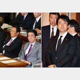 小泉進次郎(右)と安倍首相/(C)日刊ゲンダイ