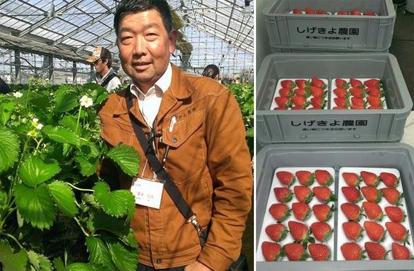 イチゴ農園を経営する重清信夫さん(C)日刊ゲンダイ