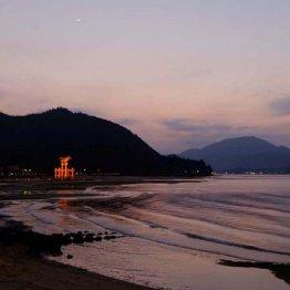 フェリー桟橋から望む 広島県・厳島神社の夕暮れの鳥居