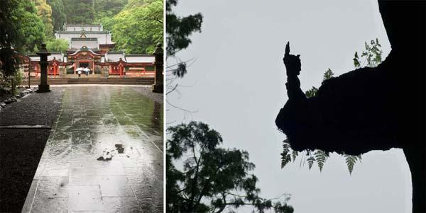 霧島神社と神木(神官に見える!?)/(提供写真)