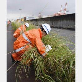 名古屋港で行われるヒアリ調査(C)共同通信社