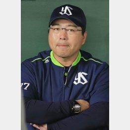 真中監督もため息(C)日刊ゲンダイ