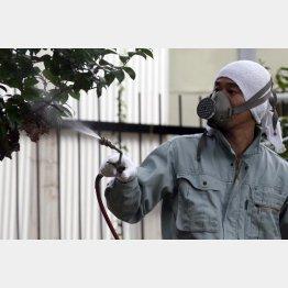 テング熱対策で蚊の除去(C)日刊ゲンダイ