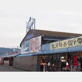 福井県敦賀市の「日本海さかな街」/(C)日刊ゲンダイ