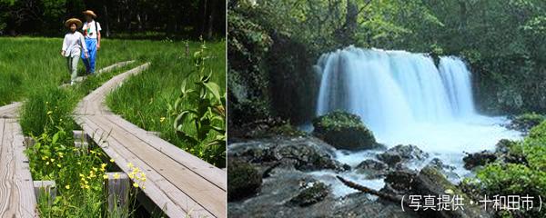 奥日光・戦場ケ原(左)と青森・銚子大滝(銚子大滝は十和田市提供)