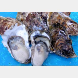 ふるさと納税は海産物も大人気(C)日刊ゲンダイ