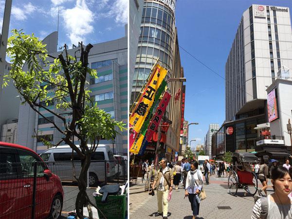 ホテル建設で名所の「藤の木」は伐採=写真左/(C)日刊ゲンダイ