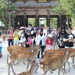 相次ぐ中国人女性の悲劇に「日本に行くと殺される」の声