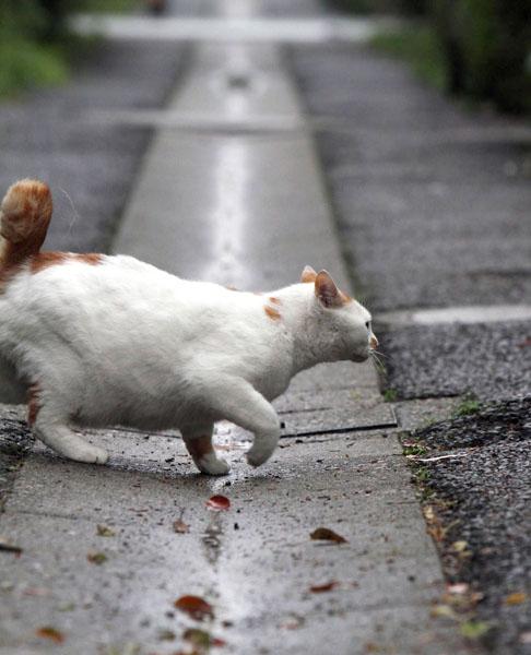 野良猫を狙った(写真はイメージ)/(C)日刊ゲンダイ