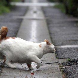 野良猫を狙った(写真はイメージ)