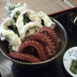 レストランさくら(淡路・富島)北淡ダコを使った丼が人気