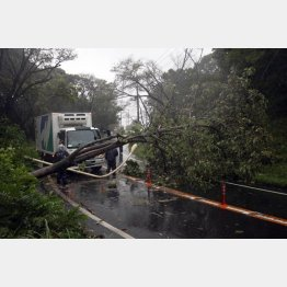 強風でへし折られた街路灯と樹木(2011年の台風15号)/(C)日刊ゲンダイ