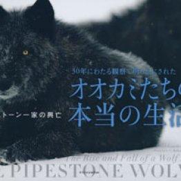 「オオカミたちの本当の生活」ギュンダー・ブロッホ著 ジョン・E・マリオット写真 喜多直子訳 今泉忠明監修