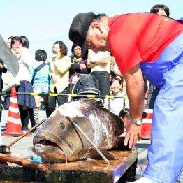 クエ、カニ、イカ…腹ごしらえは漁港の祭りで決まり