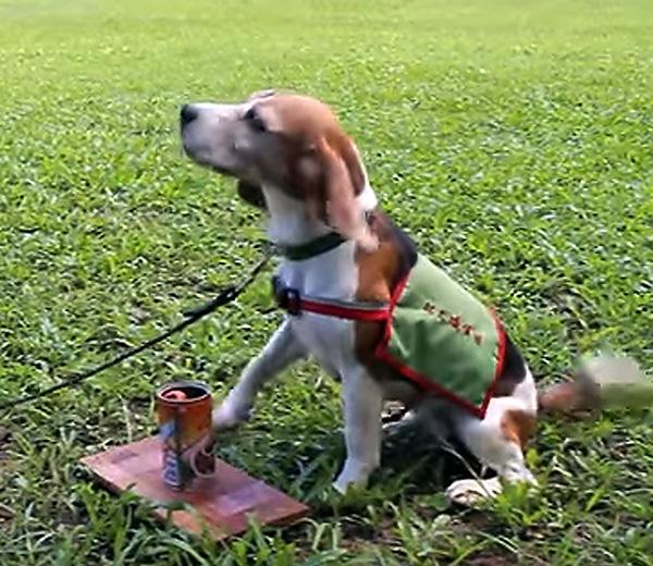 すでに台湾では活躍(台湾の「YouTube」サイトから)