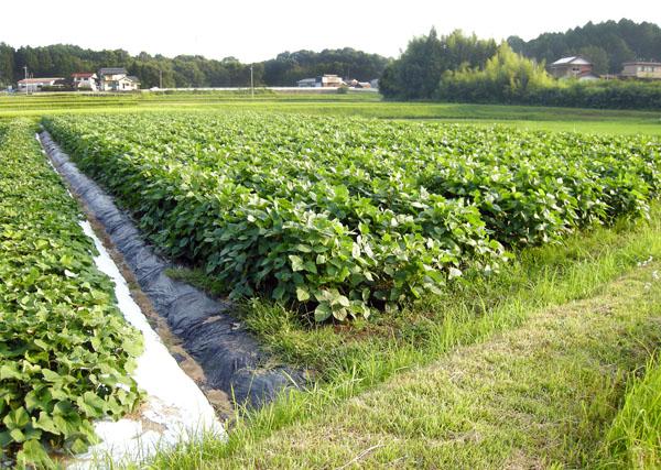 田畑のオーナー制度で田舎を楽しむ人もいるが…(C)日刊ゲンダイ