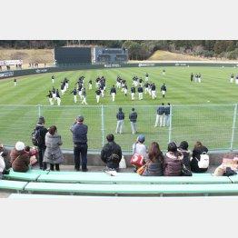 オリックスがキャンプで使用する宮崎市の球場(C)日刊ゲンダイ
