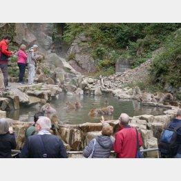 平日も外国人観光客がワンサカ(提供写真)