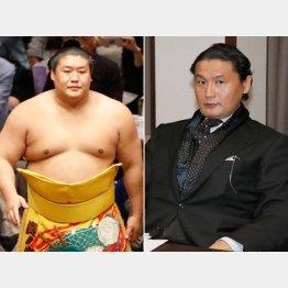 貴ノ岩(左)は安否すら不明(C)日刊ゲンダイ
