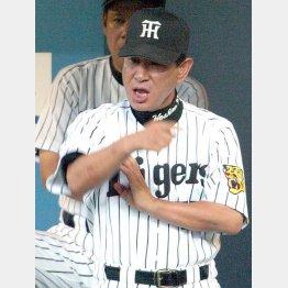 阪神時代も選手に恐れられた(C)日刊ゲンダイ
