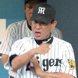 阪神時代も選手に恐れられた