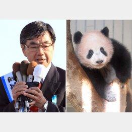 パンダ人気に便乗…のわけがない(左は現職の稲嶺市長)/(C)日刊ゲンダイ