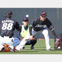 金子コーチ(左)とマンツーマンで守備練習(C)日刊ゲンダイ/石井俊平