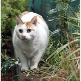 猫ブームはまだまだ続く…(C)日刊ゲンダイ