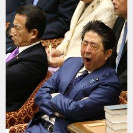 あくびをする安倍首相(C)日刊ゲンダイ