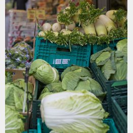 白菜、キャベツは4月ごろまで高い(C)日刊ゲンダイ