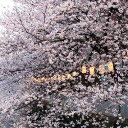 早い開花は株高ジンクス 「OLC」などレジャー関連に注目