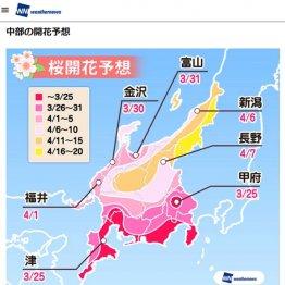 """""""入学式=桜""""のイメージ 満開でハレの日を実現できる地域"""