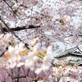 日本の名所100選の3割が 城の周りに桜の名所が多い理由
